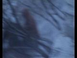 Ураган на Камчатке 2005 год